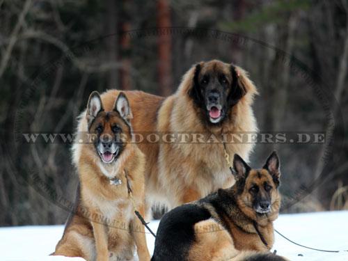 Hundeleine aus Leder oder Nylon zu kaufen