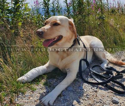 Robuste Hundeleine aus Leder für Alltag und Sport