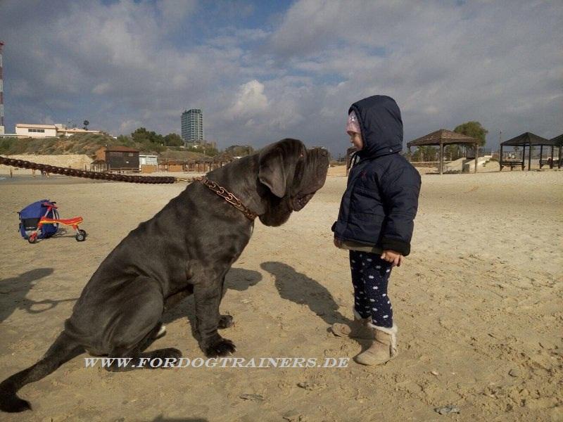 Leer Dog Training