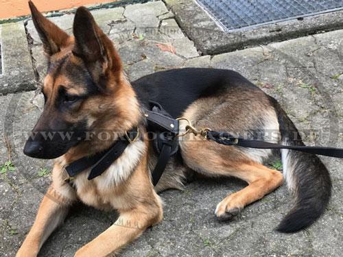 Hundeleine aus Leder für Polizei und Diensthunde