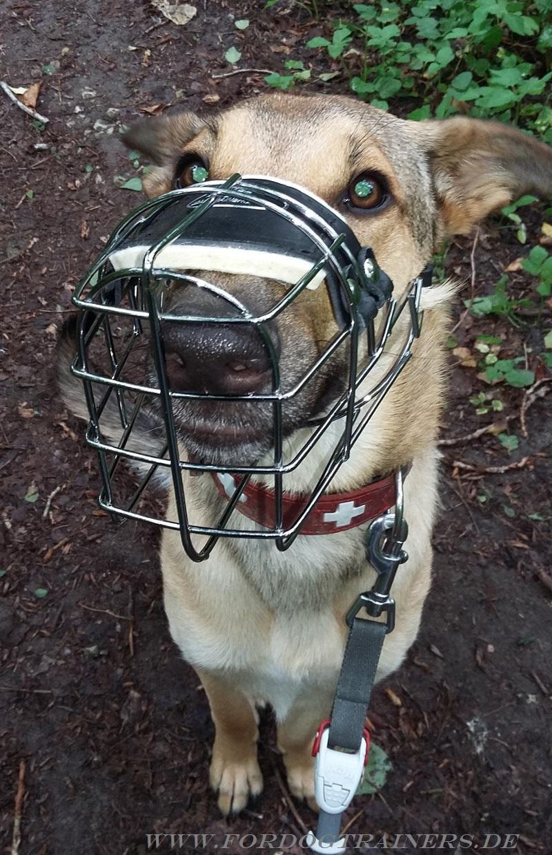 Wire Basket Dog Muzzle for Malinois   Cage Dog Muzzle for Mali
