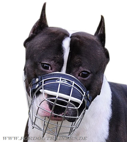 Wire dog muzzle for American Amstaff buy