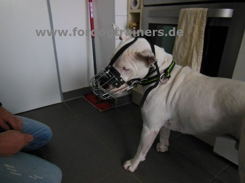 Wire dog muzzle affordable buy