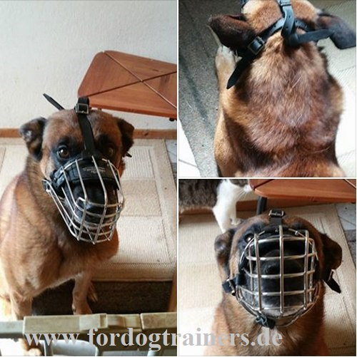 Malinois wire dog muzzle for dog activities