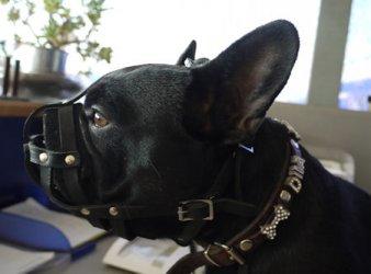 Ledermaulkorb in Netzform für mittelgroße Hunderassen