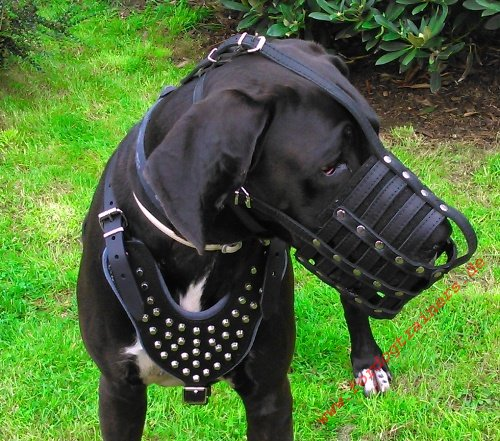 LEather Muzzle for Great Danes