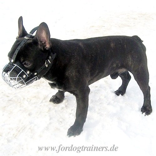 dog muzzle sale for Bulldogs