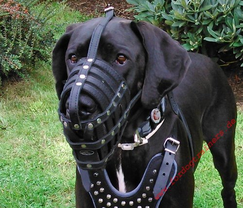 Anti Poison Leather Dog Muzzle for Great Dane