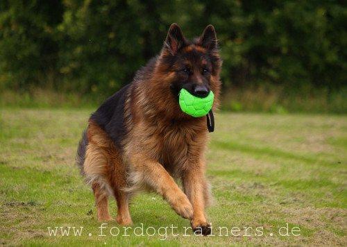 Grüner FDT Hundeball mit Nylon Schlaufe