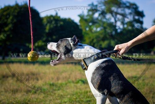 Bestseller Hundespielzeug Gummiball mit Schnur, 7 cm TOP Qualität