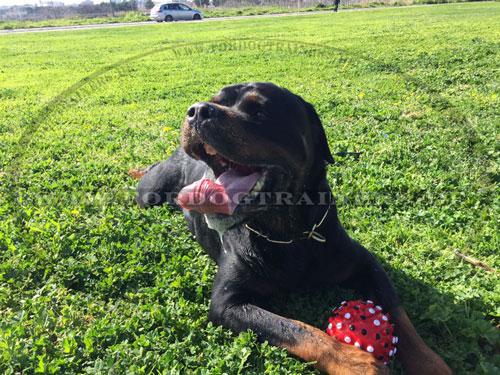 Großer Gummiball für Hunde mit Gummi-Dornen Dentalbahl