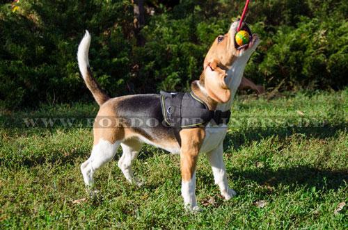 Robuster Gummiball für Hunde mit langem Nylonseil