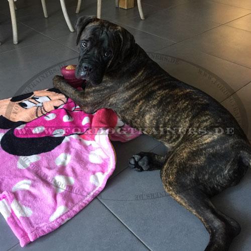 Starmark Intelligenz Spielzeug Groovy Gummiball für große Hunde