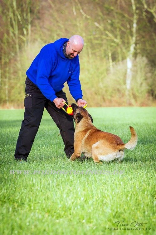 Hundeball für Hundetrainings