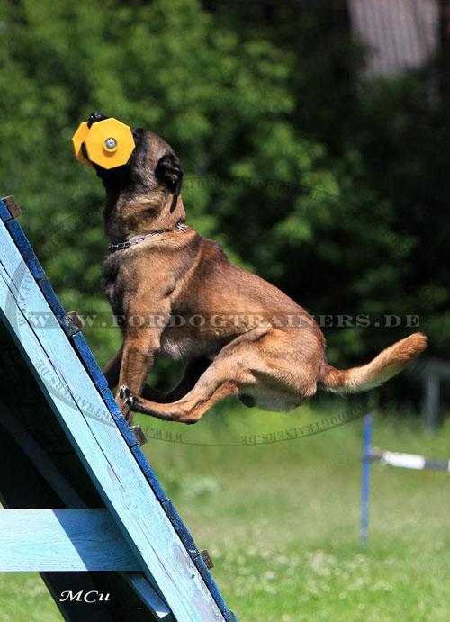 Hundesport Hantel aus Holz mit Kunststoff Platten