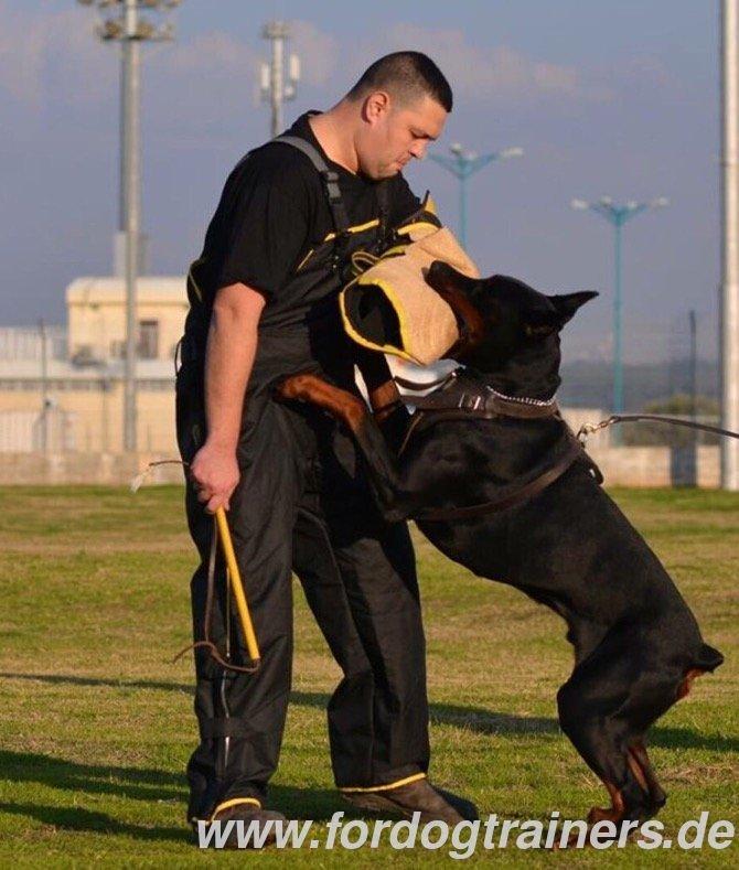 Ipo dog training tasmania