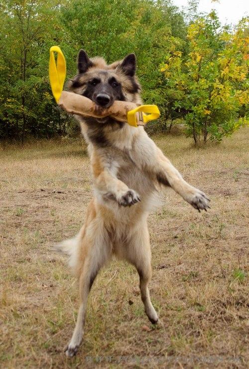 Leder Beisswurst für Hundesport