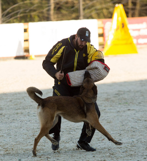 /images/dog-training-equipment/Schutzhund-BH-und-IPO-Hetzarm-small.jpg