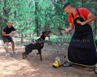 Schutzhundetraining Schürze aus Echtleder