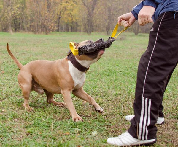 Beisswurst fuer Hunde als Geschenk