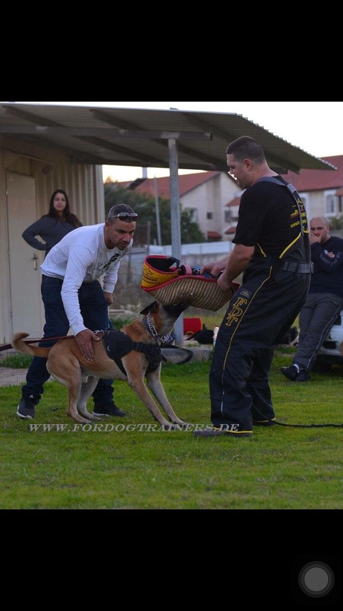 Schuetzen Dog Training