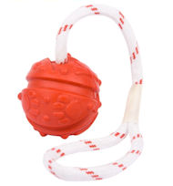 /images/dog-training-toy-ball-on-string-fight-bad-smell-DE.jpg