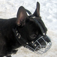 Maulkorb Französische Bulldogge