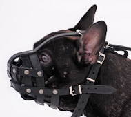 Muzzle French Bulldog Super Lightweight