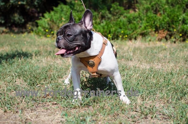 royal gepolstertes hundegeschirr für französische  ~ Geschirr Französische Bulldogge