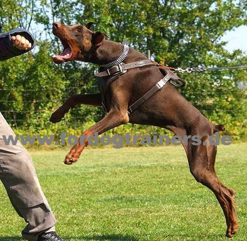 Harness Dobermann