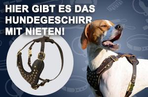 Nieten Hundehalsband aus Leder