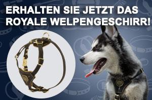 Hundegeschirr aus Nylon