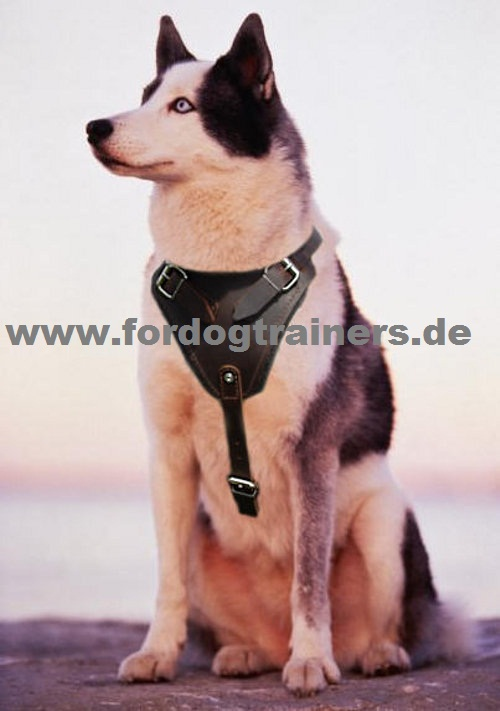 hundegeschirr aus leder k9 geschirr mit polsterung. Black Bedroom Furniture Sets. Home Design Ideas