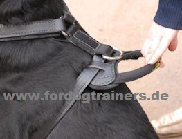 Harness with grip