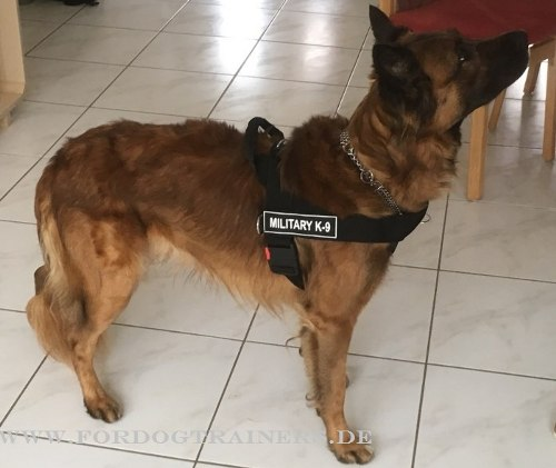 rettungsgeschirr aus nylon f252r sch228ferhund logos �419