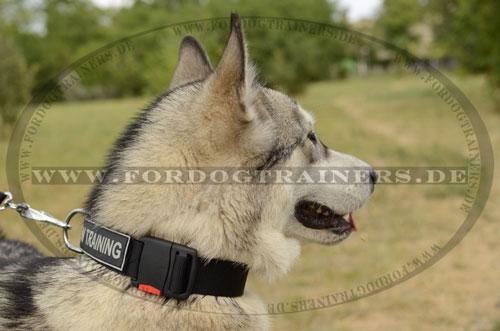Hundehalsband ohne Griff