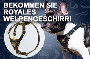 Hundegeschirr aus Leder für kleine Hunde