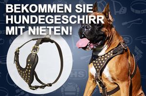 Hundegeschirr aus Leder