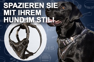 Hundegeschirr aus Leder mit Stacheldraht-Bemalung