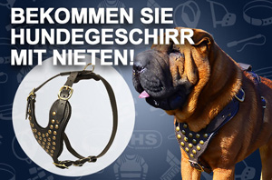 Hundegeschirr aus Leder mit verzierter Fläche