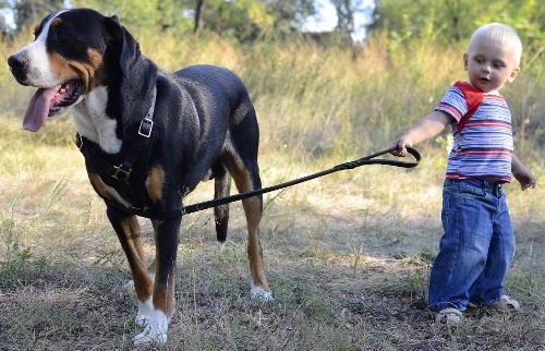 Hundegeschirre Rabatt