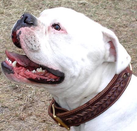 FDT Hunde Halsbänder aus hochwertigem Echtleder