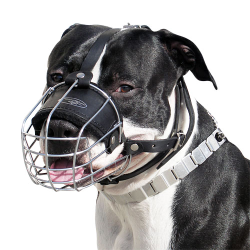 Buy Wire Dog Muzzle for Amstaff