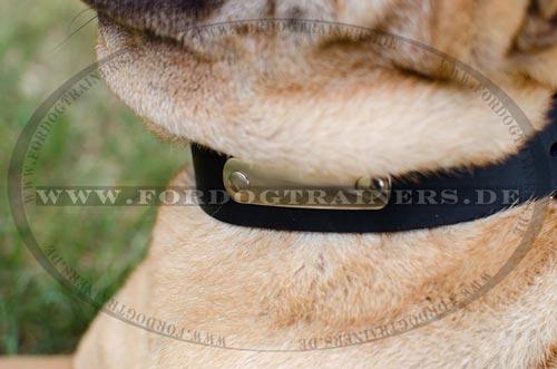 4 cm Hundehalsband aus Fettleder mit ID-Platte für Hundeauslauf