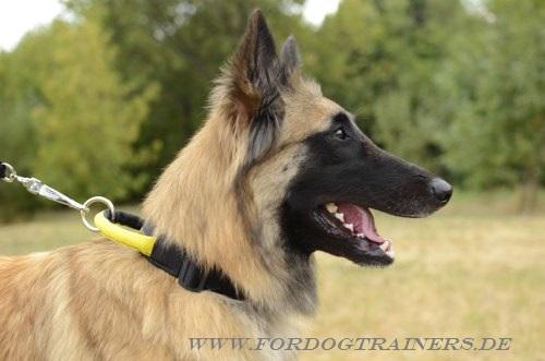 Nylon Halsband mit Schlaufe für Hundetraining