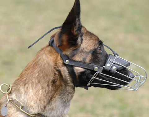 Malinois wire cage muzzle for dogs with long nose