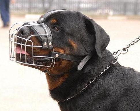 Leichter Drahtmaulkorb mit Stirnriemen für Hundeschule und Resozialisierung