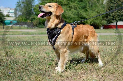 K 9 Golden Retriever Geschirr Leder Golden ...