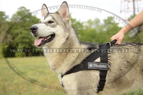 Nylongeschirr für Service- und Diensthunde