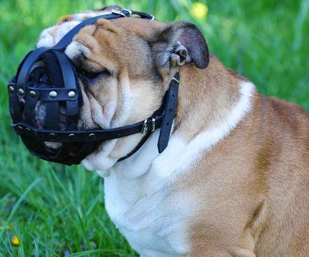 Hundemaulkorb mit Stirnriemen für Hunde mit kurzer Schnauze wie Englische Bulldogge